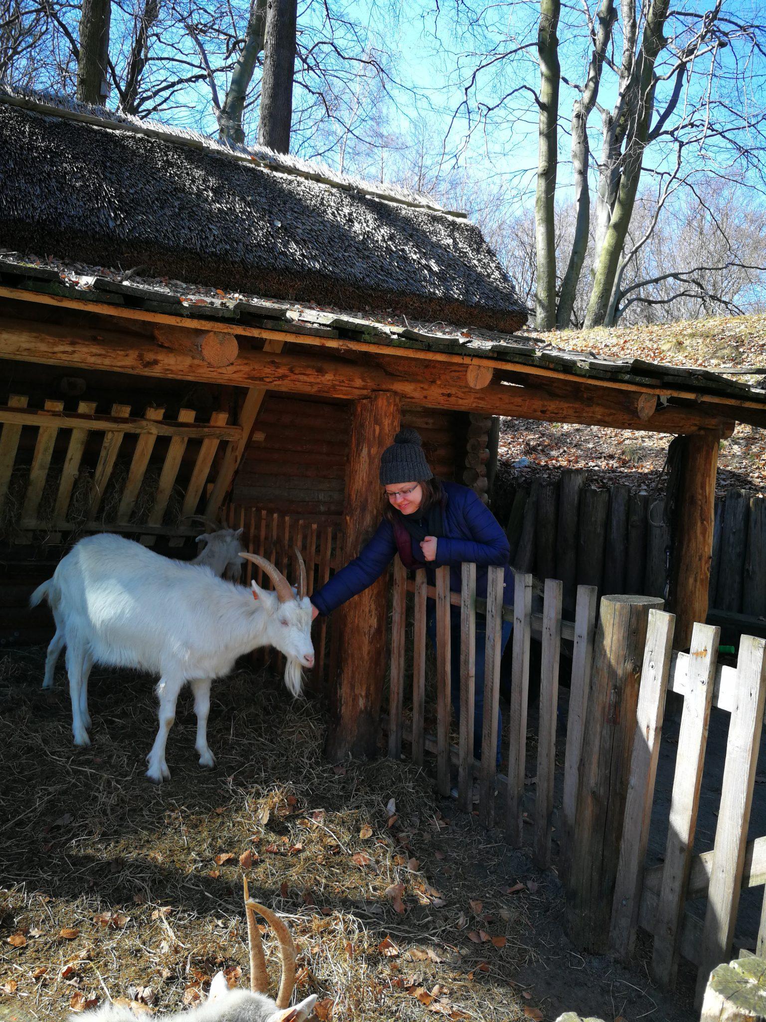 Grodzisko w Sopocie-kozy. Na zdjęciu Ania Anna Kotula www.tourguideservicegdansk.pl