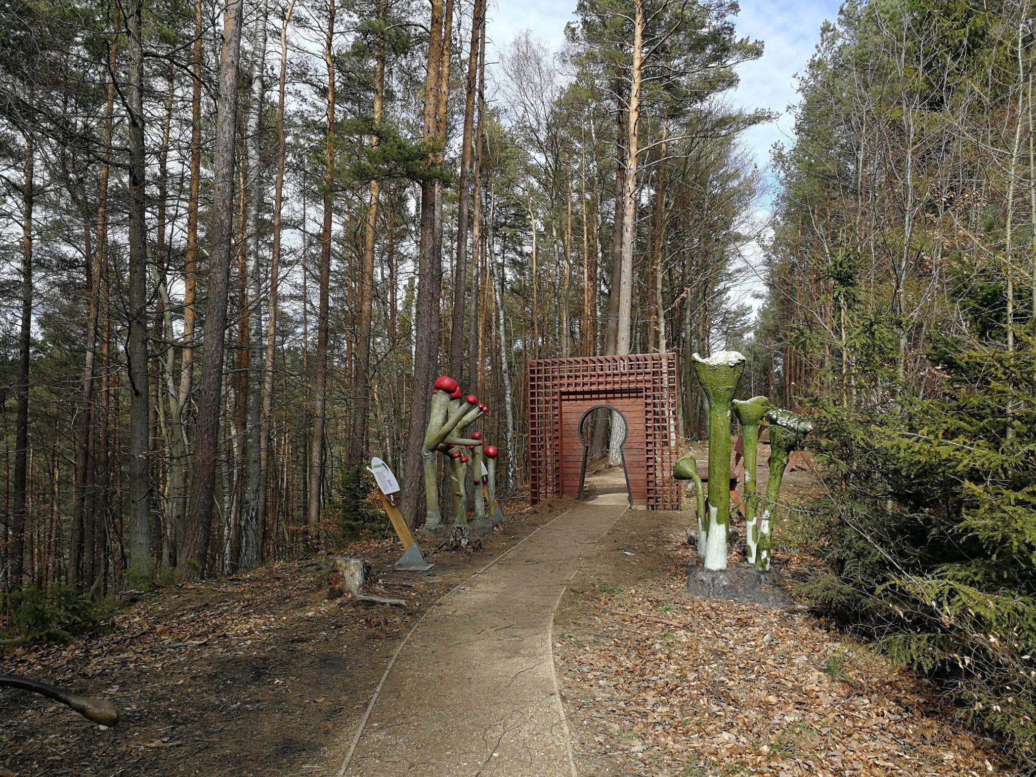 Leśny-Ogród-Botaniczny-w-Marszewie-Szlak-Alicji-zdjęcie-Tour-Guide-Service-Gdańs